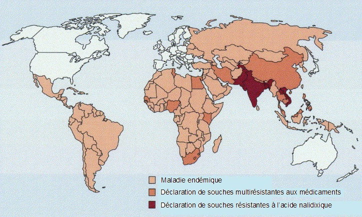 Global distribution of resistance to S. enterica serotype Typhi (1990–2002). Shaded areas show disease endemicity. Source: Parry CM, Hien TT, Dougan G, White NJ, Farrar JJ. Typhoid fever. N Engl J Med 2002;347(22):1770-82. With permission.