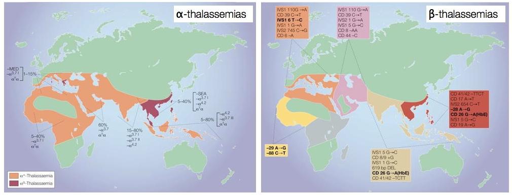 La répartition mondiale des α-thalassémies et des -thalassémies